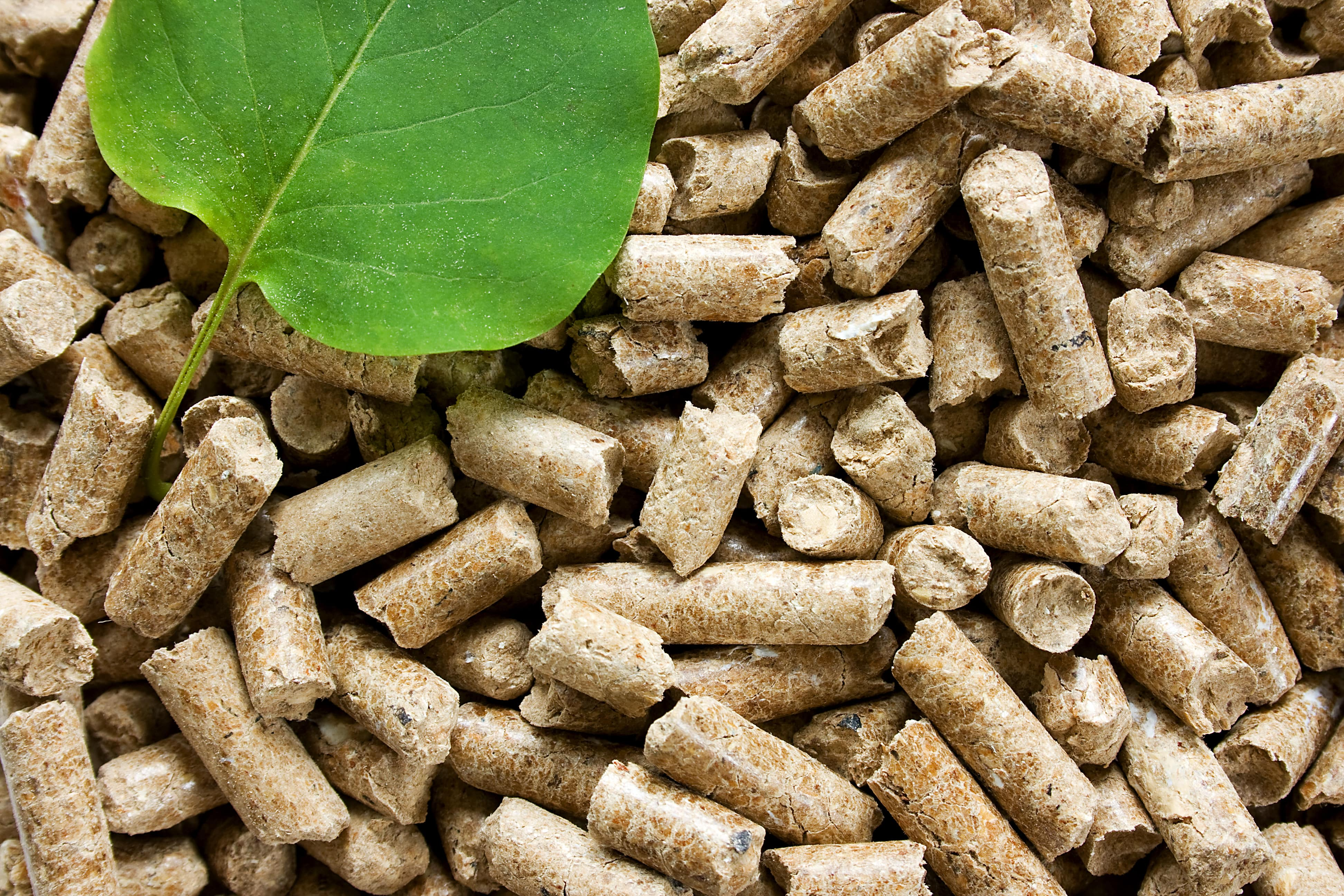 We plan to start production of wood pellets